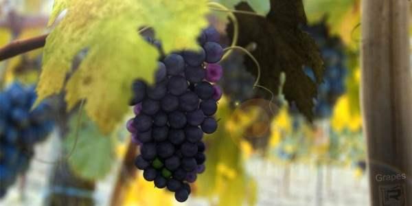Как сделать вино из винограда?Делаем винцо.
