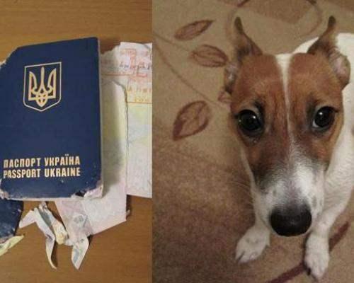 Маленький пес чуть не съел паспорт