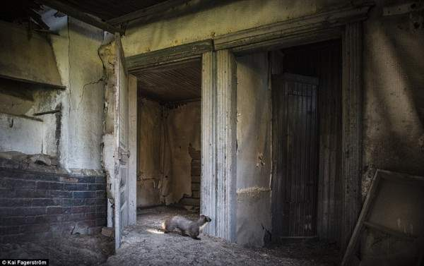 заброшенный дом в Финляндии10
