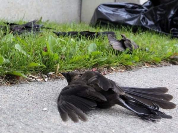130807 birds07.JPG