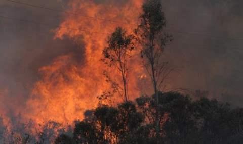 В Австралии + 45. Страшные пожары охватили страну.