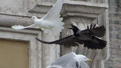 ватикан голуби
