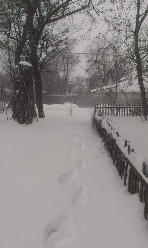снег в днепропетровске 28 января 2014. 13