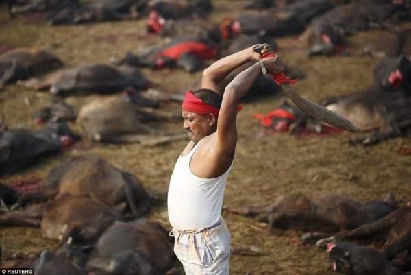 Непал убой4