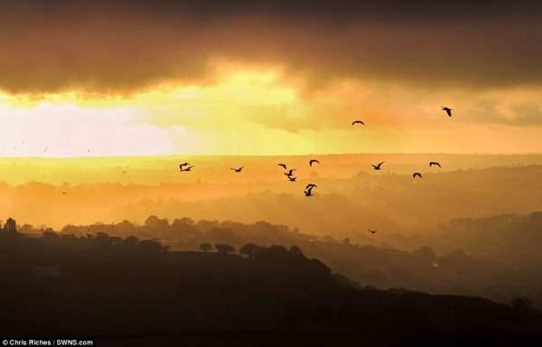 Птицы летают в туманном небе Фовей, что в Корнуолле.