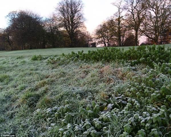 Иней на траве в Хэмпстед-Хит, самой теплой части Великобритании.