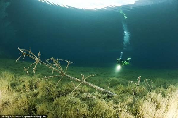 Дерево под водой в затопленном парке