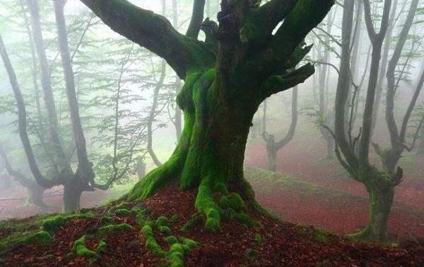 испания волшебный лес