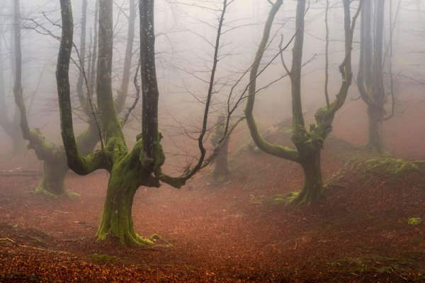 испания волшебный лес10