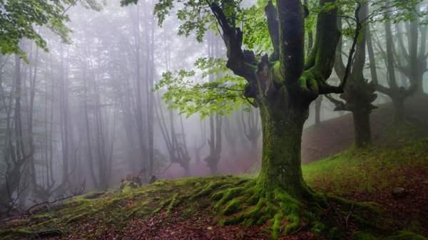 испания волшебный лес2