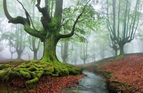 испания волшебный лес4