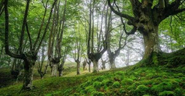 испания волшебный лес5