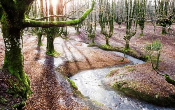 испания волшебный лес6