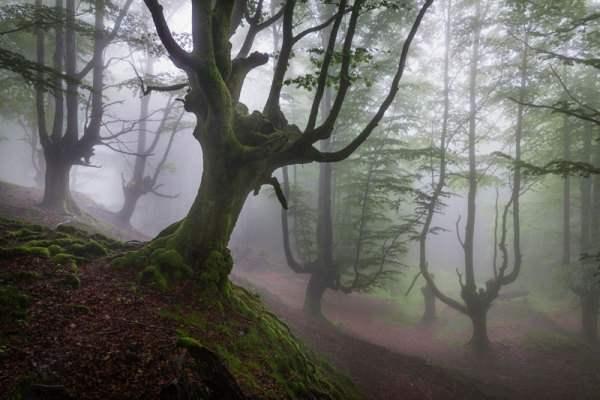 испания волшебный лес7