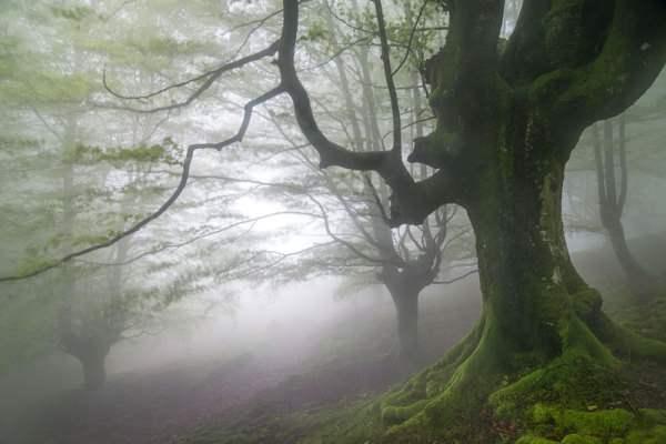 испания волшебный лес8