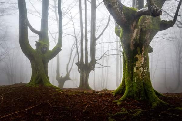 испания волшебный лес9