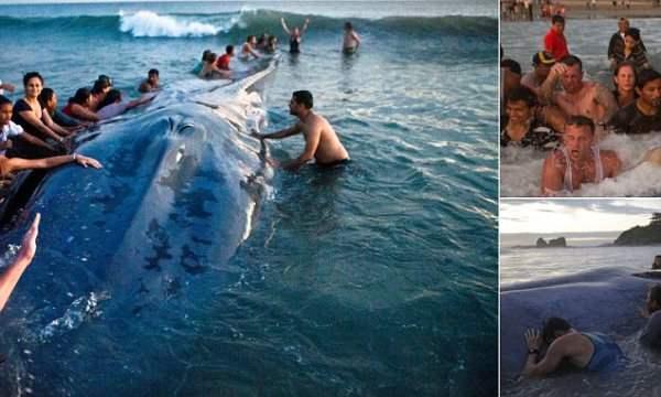кит Никарагуа11
