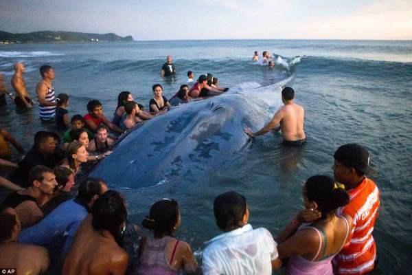 кит Никарагуа2