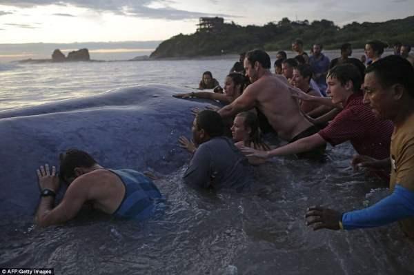 кит Никарагуа5