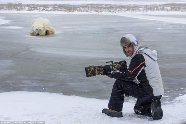медведь и собака4