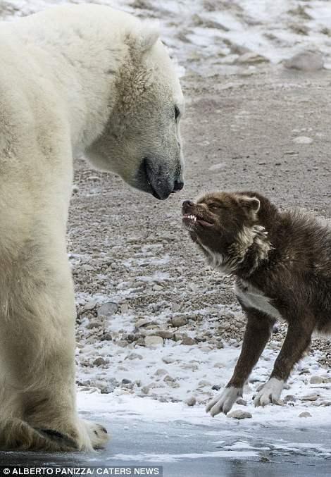 медведь и собака6