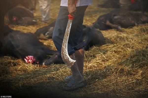Один из многих мясников держит свой клинок, который был благословлен в церемонии накануне вечером.