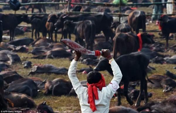 Мясник ходит с окровавленным лезвием. За сегодня он  сам убил сотни животных.