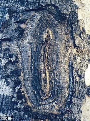 дерево дева мария