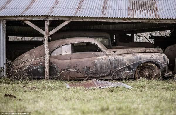 Многие из этих ржавых авто стоят сотни тысяч долларов.