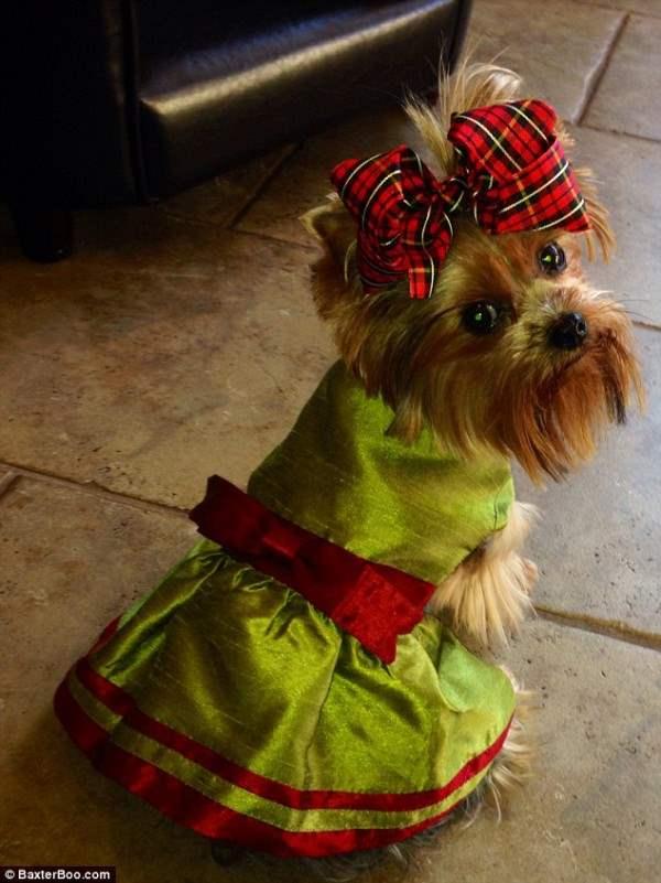 костюмы для собак10