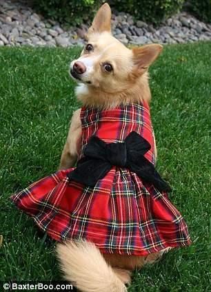 костюмы для собак13