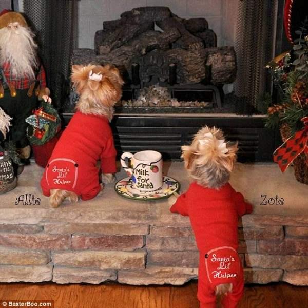 костюмы для собак14