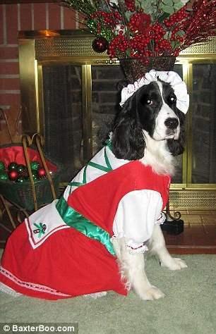 костюмы для собак15