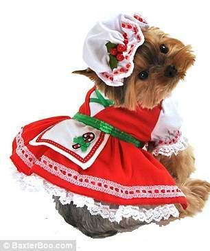 костюмы для собак18