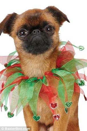 костюмы для собак19