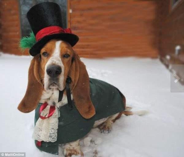 костюмы для собак2