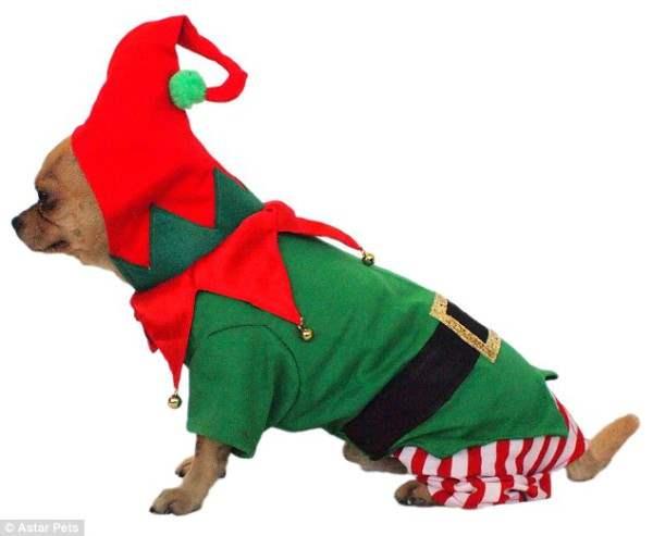 костюмы для собак22