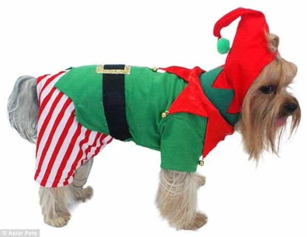 костюмы для собак23