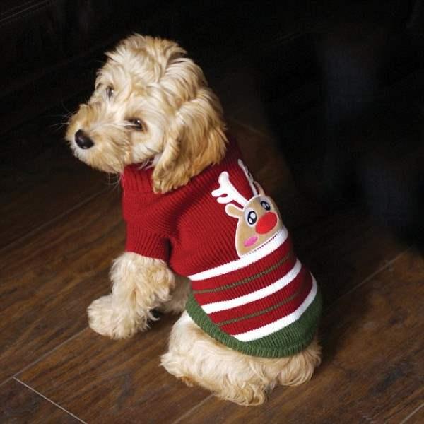 костюмы для собак27