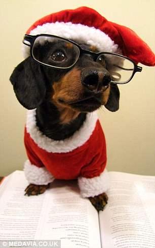 костюмы для собак3