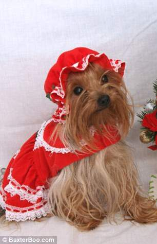 костюмы для собак8