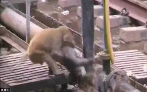 обезьяна6