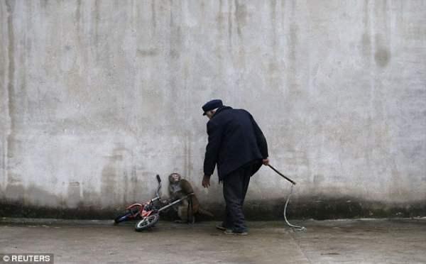 Обезьянка у стены в ожидании очередных побоев