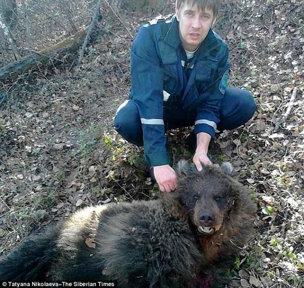 Чтобы спасти женщину, спасательная группа применила огнестрельное оружие и убила медведя