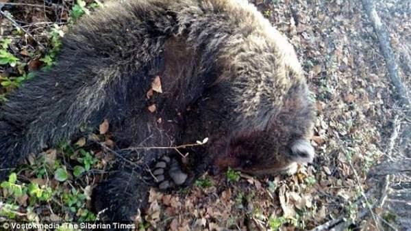 Полиция застрелила медведя