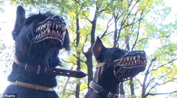 Намордники для собак от Марии Курилевой