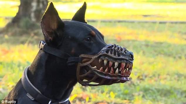 Новый аксессуар предназначен для защиты владельцев от потенциальных злоумышленников во время прогулки поздно со своей собакой в парке.