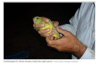 """В Австралии поймали попугая, который является  """"Святым Граалем"""" птиц."""