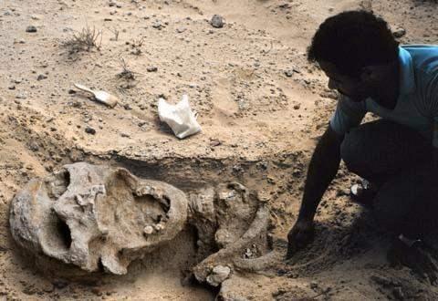 В Эквадоре найден скелет человека более 7 метров.