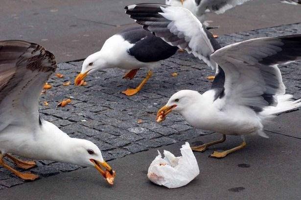 чайки крым 2015 2